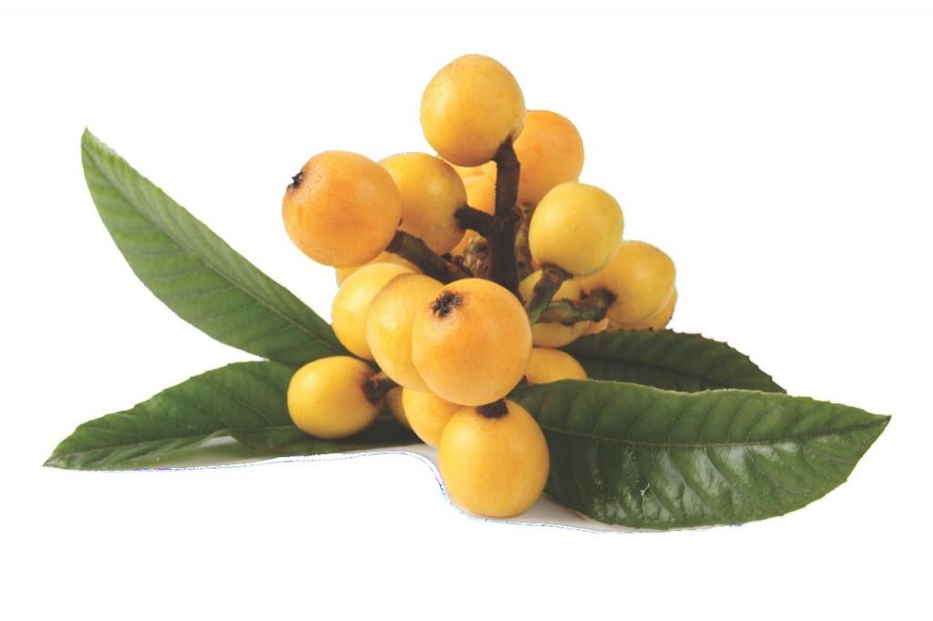 Uroczy owoc ouroczej nazwie. Kosmatka japońska brzmi poprostu słodko.