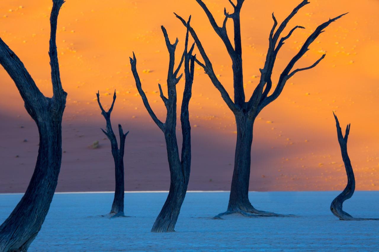 Wypalone słońcem akacje mają nawet 900 lat.