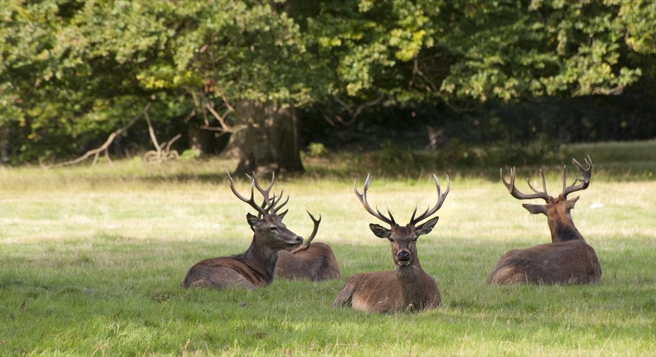 Windsor Great Park – wspaniały relaks wangielskim wydaniu.